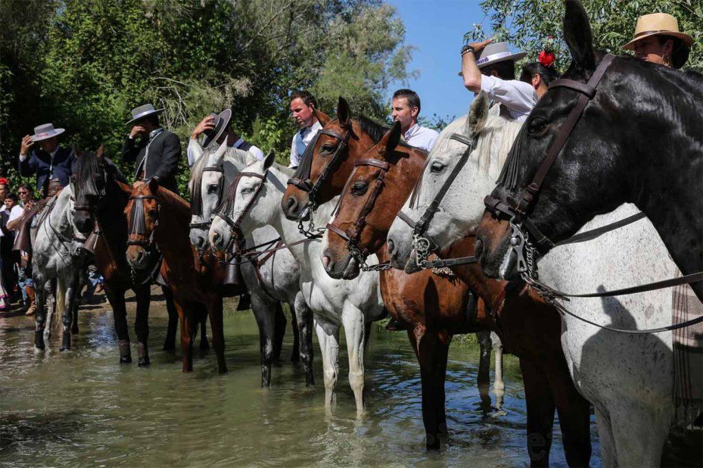 caballos-el-rocio-paso-del-quema