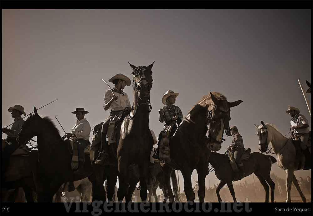 Saca de yeguas Virgen del Rocío caballos